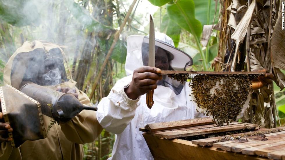 Cameroon beekeeping_credit - Eler Griffiths